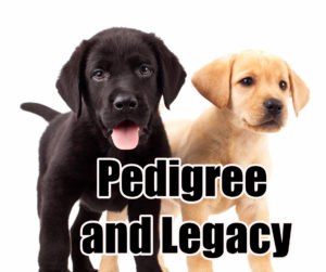 pedigree-and-legacy